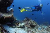 Diver — Stock Photo