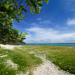 Stock Photo: Apo Reef Natural Park