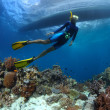Stock Photo: Freediving