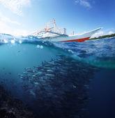 Fisk — Stockfoto