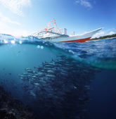 Peixe — Foto Stock