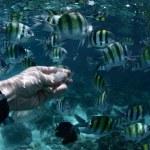 Fish — Stock Photo #40179945