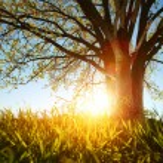 Tree — Stock Photo #40182583