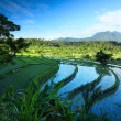 Stock Photo: Bali