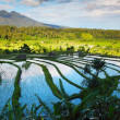 Bali — Stock Photo #40187295
