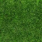 Grass — Stock Photo #40187643