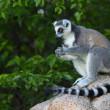 Madagascar — Stock Photo #40192067