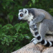 Madagascar — Stock Photo #40192093