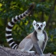 Madagascar — Stock Photo #40192123