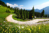 Green meadow and road in Alps in a sunny day. — Stock Photo