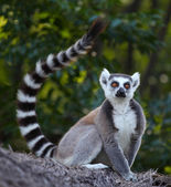 Madagascar — Stock Photo