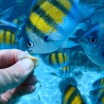 Fish — Stock Photo #50238317