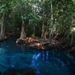 Mangroves — Stock Photo #50238579
