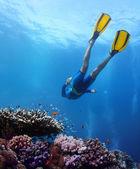 Freediver — Stok fotoğraf