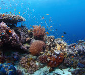 Reef — Stockfoto