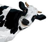 Cow's head — Stock Photo