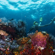 Reef — Stock Photo #50240875