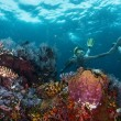 Reef — Stock Photo #50240879