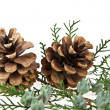 Cones and the branch — Stockfoto