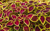 Decorative design with colored leaves — Stock Photo