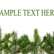 Branches of fir-tree — Stock Photo #35913611