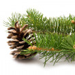 Branch of fir-tree and cone — Stockfoto #35913619