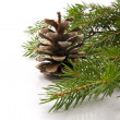 Branch of fir-tree and cone — Stok fotoğraf