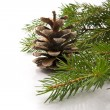 Branch of fir-tree and cone — Stok fotoğraf #35913647
