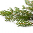 Stockfoto: Branch of fir-tree