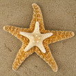 Stock Photo: Starfishes