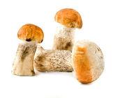 Funghi — Foto Stock