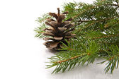 Branch of fir-tree and cone — 图库照片