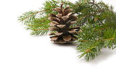 Branch of fir-tree and cone — Foto de Stock