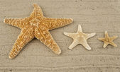Sea the stars — Stock Photo