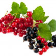 Currant — Stock Photo #35925103
