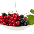 Currant — Stock Photo #35925297