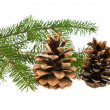 Stock Photo: Branch of fir-tree and cone