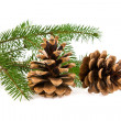 Branch of fir-tree and cone — Stock Photo