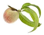 Peaches — Stock Photo