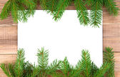 Branches of fir-tree — Stock Photo