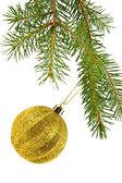 Branch of fir-tree — Stockfoto