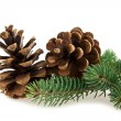 Cone and branch of fir-tree — Stock Photo #40665159