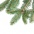 Stock Photo: Branch of fir-tree
