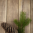 Branch of fir-tree and cone — Stock Photo #40665477