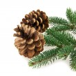 Cone and branch of fir-tree — Stock Photo #40665943