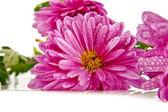 Flowers in dew — Stock Photo