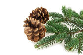 Cone and branch of fir-tree — Stock Photo