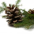Branch of fir-tree and cone — Foto Stock