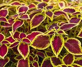 Design decorativo con foglie colorate come sfondo — Foto Stock