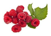 Raspberry — Stock fotografie